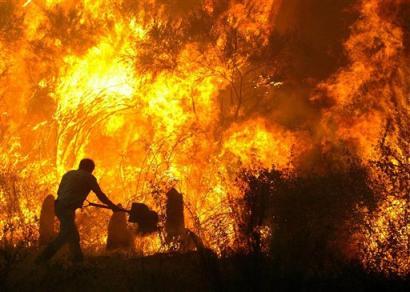 هشداررییس انجمن جنگلبانی ایران نسبت به افزایش آتش سوزی درجنگل ها
