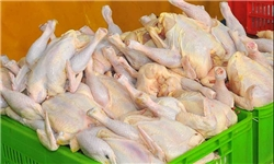 افزایش ۱۲۰۰ تومانی قیمت مرغ در گیلان