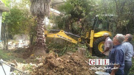 بزرگترین درخت پالم شهر رشت به شهرداری اهدا شد+ تصاویر