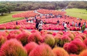 ۱۰ باغ زیبا و رنگارنگ در دنیا +تصاویر