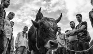 گزارش تصویری از بازار مالفروشان کوچصفهان