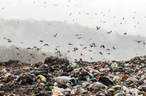 زباله سراوان، بحرانی کشوری؛ دفن جنگلهای سراوان زیر خروار زباله