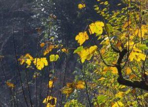 تصاویر؛ آخرین روزهای پاییز