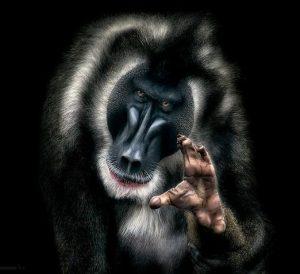 تصاویر؛ ژست گرفتن حیوانات جلوی دوربین