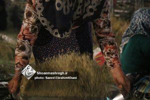 گزارش تصویری سومین روز جشنواره جوکول شهرداری رشت