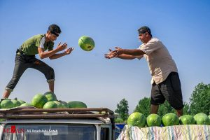 گزارش تصویری : بازار دیدنی هندوانهفروشها در لنگرود