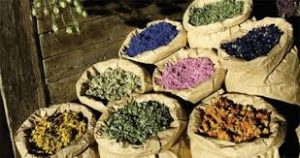 تولید ۱۸ تن گیاهان دارویی گلخانهای در گیلان
