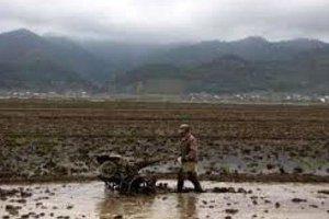 زمان کشت تولید برنج در گیلان رو به کاهش است