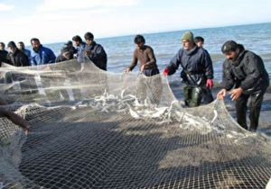 رشد ۴۰ درصدی صید ماهیان استخوانی در گیلان