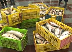 افزایش ظرفیت تولید پرورش ماهی در قفس گیلان تا پایان سال