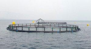 افزایش ۴۰۰۰ تنی ظرفیت پرورش ماهی در استان گیلان