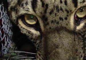 ۹۵ گونه جانوری استان گیلان در خطر انقراض قرار دارند