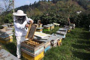 برندسازی راه حل مقابله با سودجویی در بازار عسل کشور است