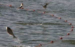 ممنوعیت صید در دریای خزر به معیشت صیادان آسیبزده است