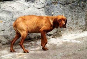 صدور حکم برای متهم سگ آزار در شفت