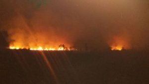 احتمالا آتشسوزی تالاب امیرکلایه عمدی است/ میزان دقیق خسارت وارده در دست بررسی است