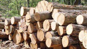 کشف بیش از ۴ تن چوب قاچاق در صومعهسرا