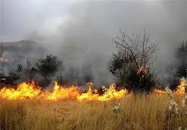 آتشسوزی در ۱۷ هکتار از اراضی جنگلی رودبار