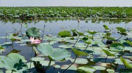 درخواست صدور دستور قضایی برای توقف دائم پروژه «بایوجمی»