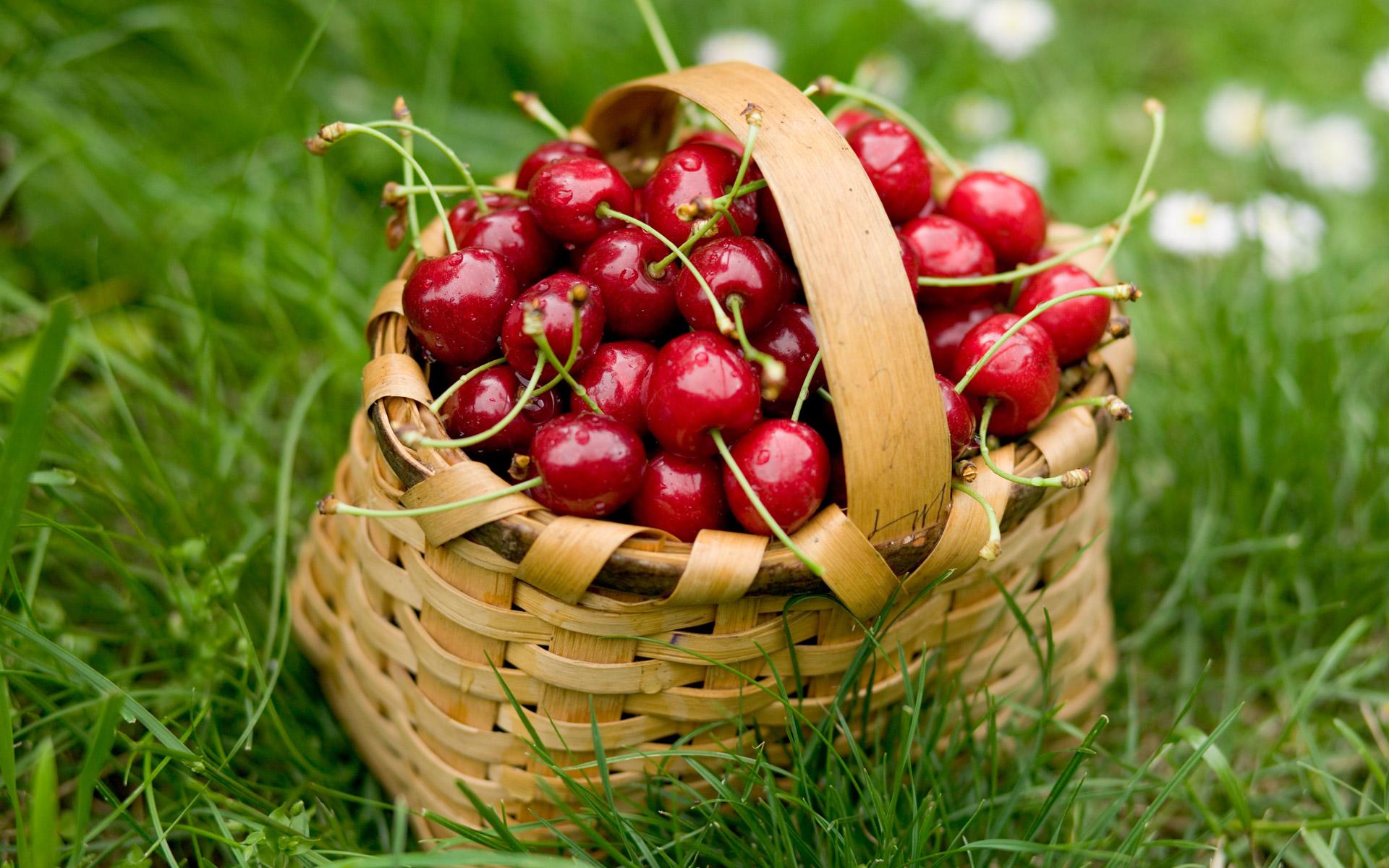 معرفی میوههایی که دیوانهوار چربیها را میسوزانند