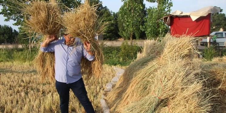 تنظیم بازار برنج در دست سودجویان/ ضرورت نظارت دولت بر واردکنندگان برنج
