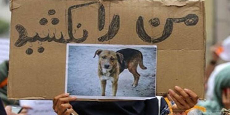 شهرداری پای محیط زیست را به ماجرای سگهای کهریزک باز کرد