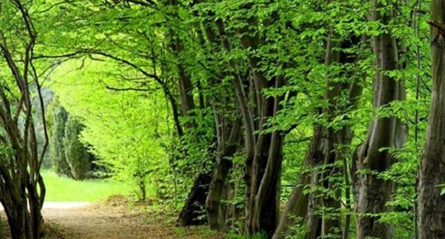 زیباترین جنگلهای ایران را میشناسید؟